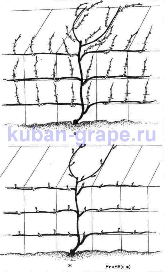 http://kuban-grape.ru/images/2009/11/r68c.jpg
