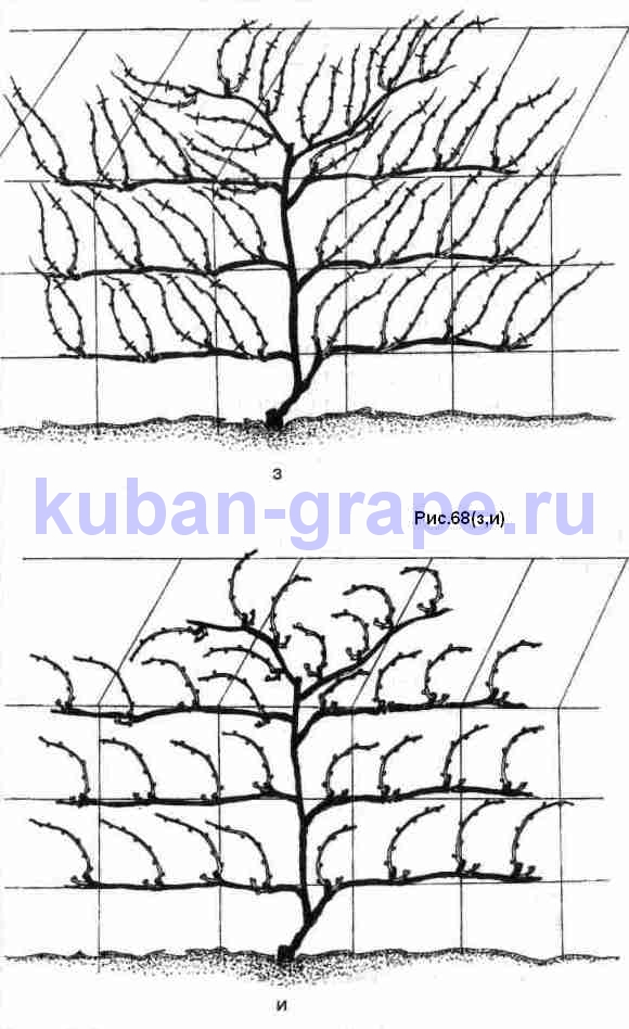http://kuban-grape.ru/images/2009/11/r68d.jpg